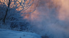 Morning frost on branches on a cold winter day. Stock Footage