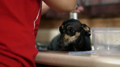 Little Dog Takes a Bath Stock Footage