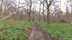 Floating footage through woods DJI Phantom Stock Footage