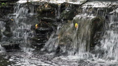 4K Outdoor Waterfall with Flowing Water From the Stones Stock Footage