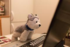 Plush toy a dog attentively looks in the laptop Stock Photos