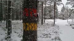 Marked trees in a snowy winter forrest, in Raasepori, Finland Stock Footage