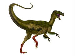 Ornitholestes Dinosaur Tail Stock Illustration