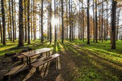 Autumn park without people in Tokyo,Japan Stock Photos
