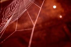 Nice colored cobweb - stock photo