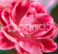 Plastic flower Stock Photos