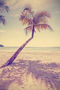 Retro old film style toned tropical beach with palm tree. Stock Photos