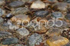 Stone paved way Stock Photos