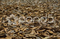 Paved floor covered with dead leaves Stock Photos