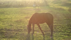 Horse during sunset - stock footage