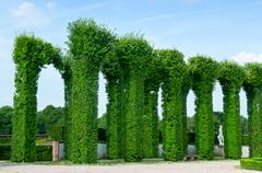 beautiful shrubs in the park - stock photo