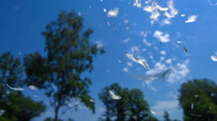 Plumes in the Sky Stock Footage