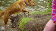 Girls get wet when their dog shakes water off Stock Footage