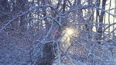 Sunrise illuminates snowy forest in winter in slow motion Stock Footage
