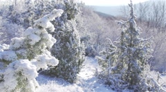 Beautiful winter landscape with snowy pine trees illuminated by the sun Stock Footage