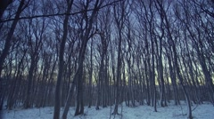 Wind in the forest in winter early morning before sunrise Stock Footage