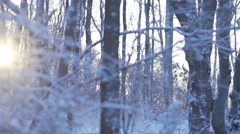 Morning sun shines a warm light snowy trees and shrubs Stock Footage
