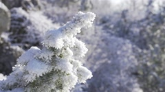 Movement in slow motion along a snowy pine Stock Footage
