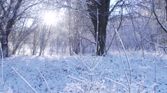 Snow melts from the trees illuminated by sunlight Stock Footage