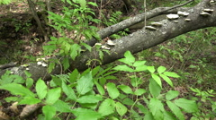 Mushroom goes on with a cane thicket in search of herbs and medicinal plants Stock Footage