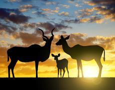 Silhouette Greater kudu Stock Photos