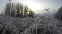 Frost covered grass stalks, time lapse 4K - stock footage