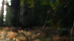 SPIDER WEB BLOWING IN THE WIND IN FOREST BACKLIT Stock Footage