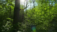 Green Oaks and spring sun Stock Footage