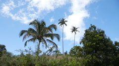 Landscape with coconut trees and mountains - stock footage