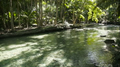 River in the rainforest in Cebu Philippines Stock Footage