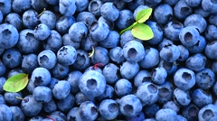 Blueberry background. Fresh and ripe organic blueberries rotating Stock Footage