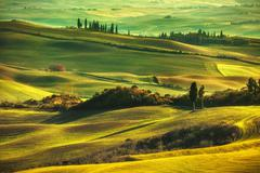 Tuscany spring, rolling hills on misty sunset. Rural landscape. Green fields Stock Photos