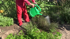 Man wearing red clothes watering herbs in  garden with awatering can, 4K Stock Footage