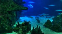 Timelapse of Ocean Floor 4K Stock Footage