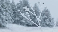Grass ice frozen snow winter pretty Stock Footage