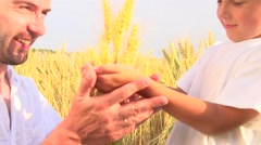 Father's and son's hands holding wheat ears Stock Footage