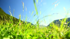 Alpine meadow. Fresh grass closeup Stock Footage
