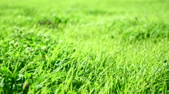 Fresh green grass field. Alpine meadow. Grass background Stock Footage