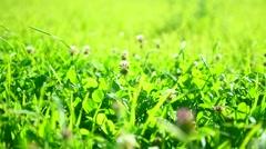 Fresh green grass field. Alpine meadow Stock Footage