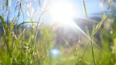 Alpine meadow. Grass closeup with sunbeams - stock footage