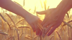Couple taking hands and walking on golden wheat field over beautiful sunset Stock Footage