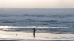Person Walking Oregon Coast Hunting For Clams Stock Footage