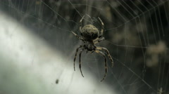 The large orb web of a garden spider in Vienna - stock footage