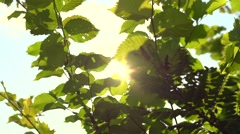 Nature background. Beautiful sun shine through the tree green leaves. Stock Footage