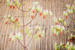 Beautiful flower in spring time vintage style Stock Photos
