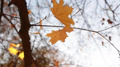 Yellow Autumn Leaves on Tree. Beautiful Autumn background. Stock Footage