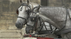 Carriage horses at Stephansplatz, Vienna Stock Footage