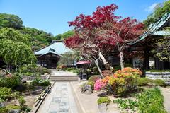 KAMAKURA, JAPAN-Circa APR, 2013: Beautiful spring garden with blooming red tr Stock Photos