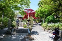 KAMAKURA, JAPAN-Circa APR, 2013: Tourist photographs nature of blooming garde Stock Photos