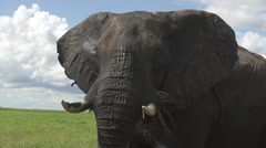 Elephant shakes it's head Stock Footage
